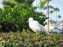 10 White Heron Chick