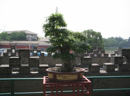 34. Circular city, bonsai plant 1